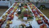 Výstava ovoce a zelininy 15.10.2010